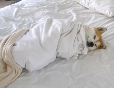 dog-sleeping-bed-funny-animal-photos-11__605-600x460.jpg